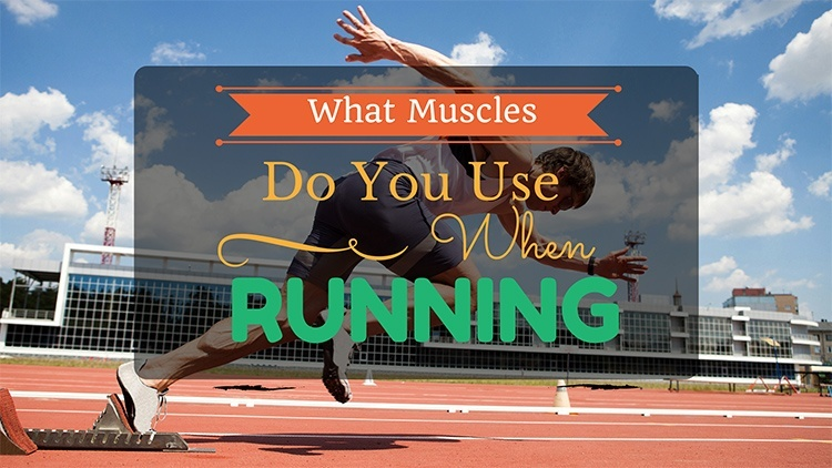 what muscles do you use when running