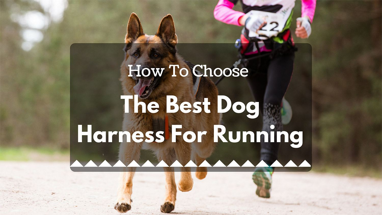 best dog harness for runnning