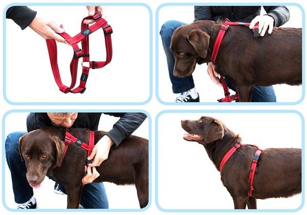 put-on-harness