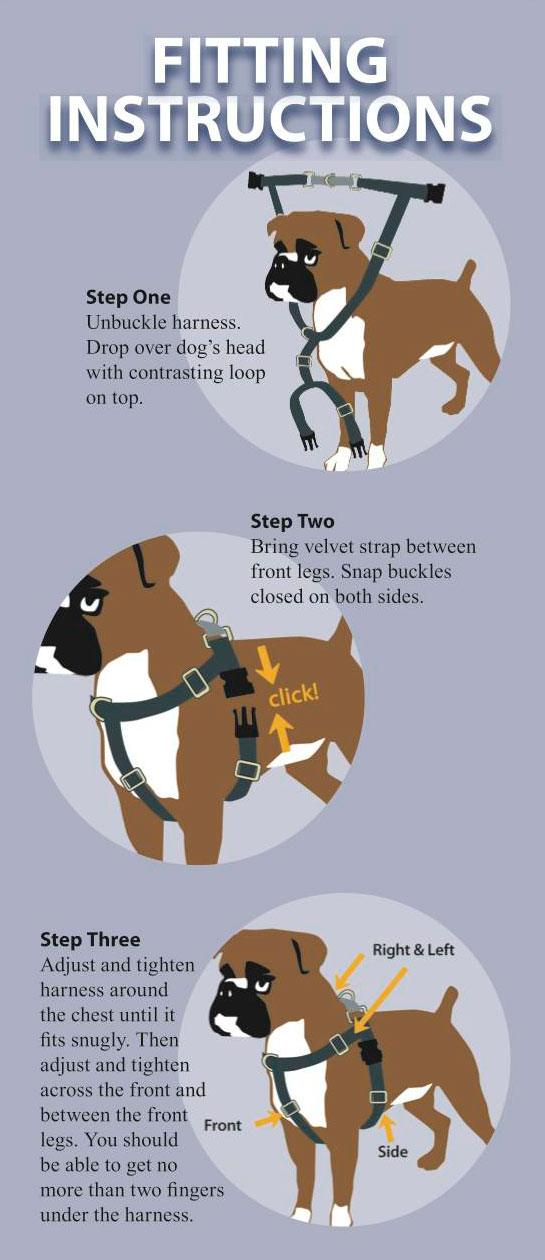set up dog harness